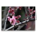 bee_in_flower_greeting_card-r55608f60d40541fb97045ead2e55142d_xvuak_8byvr_152