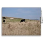 cows_in_a_field_greeting_card-rf4582e1e8a0b45cfa3d416602bfd4ab9_xvuak_8byvr_152