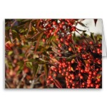 nandina_berries_greeting_card-rcce6df860d0e41229511e6678de3ec34_xvuak_8byvr_380