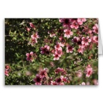 pink_flowers_greeting_card-r5a1ab8bed2624131aaa582c3e85d894d_xvuak_8byvr_152