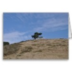 point_reyes_tree_greeting_card-r46faabde9704445d98f0857787e4ce44_xvuak_8byvr_152