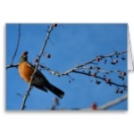 robin_with_berry_in_beak_greeting_card-r065d2978cd9b4322a5b1e338782cdad1_xvuak_8byvr_152