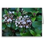 small_flowers_greeting_card-r20be2e7b808044ca9bbe4bf441b84ab1_xvuak_8byvr_380