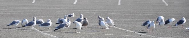 Gulls_cropped